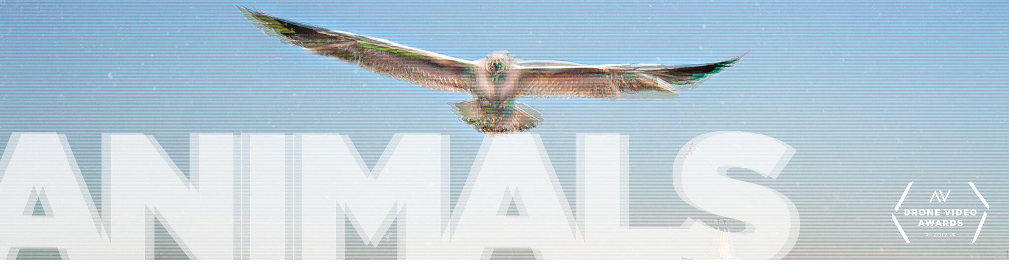 AirVūz Drone Video Awards: Animals